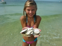 Hunting for sand dollars at Shell Island!